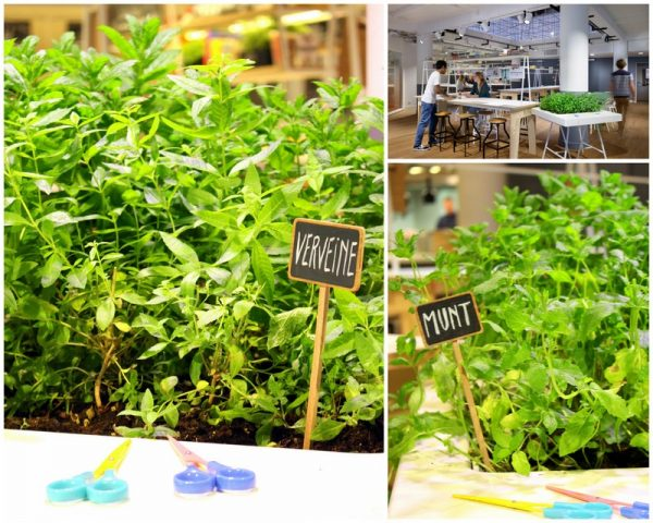 herbes-en-libre-service